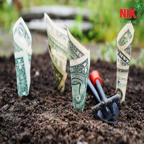 Tiền chỉ được gặt ở nơi trồng ra được tiền